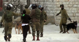 460_0___10000000_0_0_0_0_0_20141223_military_dogs_in_beit_omar